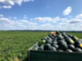 watermelon wagon.jpg