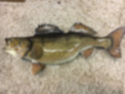 Lax Reproductions Walleye