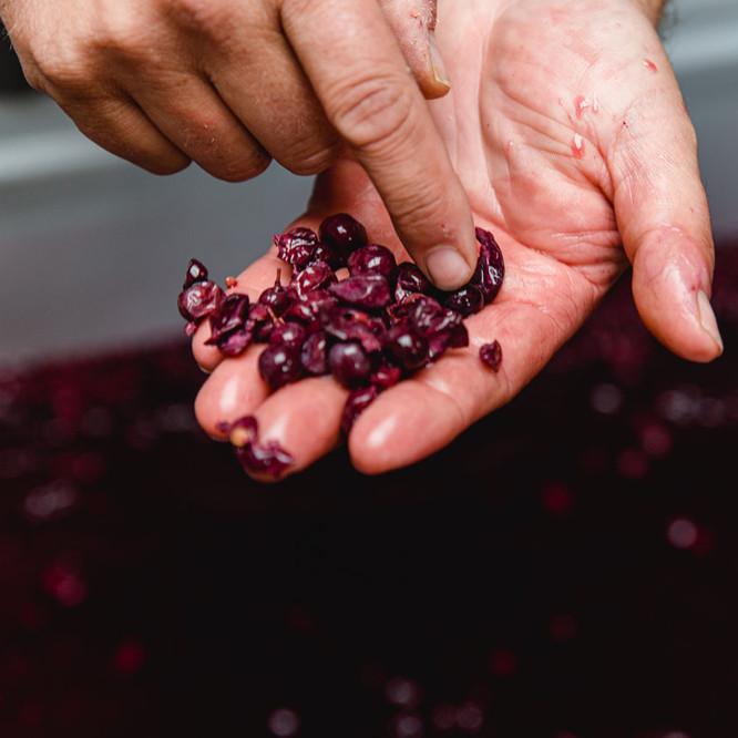 Weinpresse-Weingut-Eppelmamnn-60.jpg