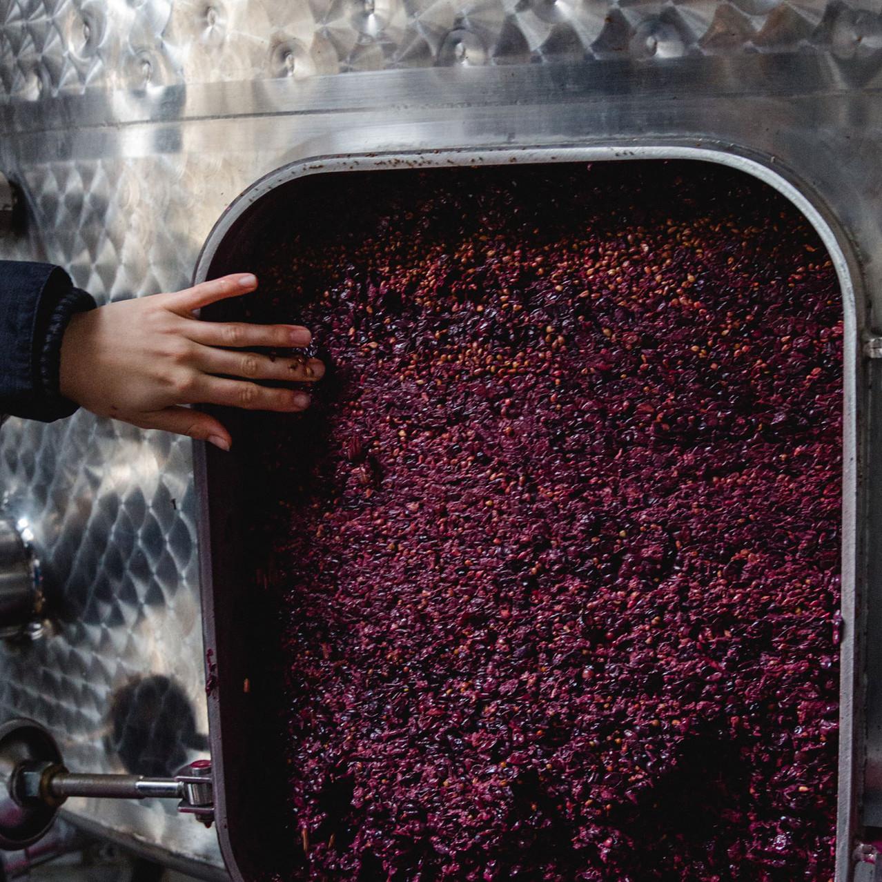 Weinpresse-Weingut-Eppelmamnn-70.jpg