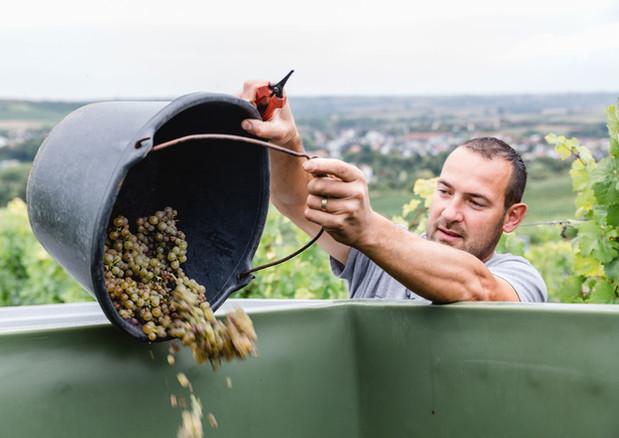 Weingut Eppelmann
