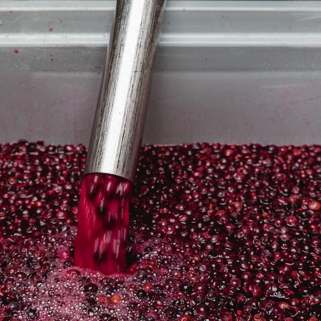Weinpresse-Weingut-Eppelmamnn-68.jpg