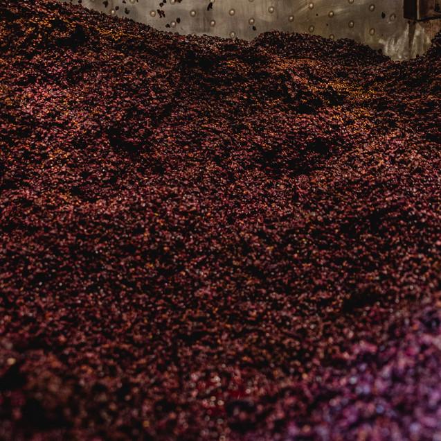 Weinpresse-Weingut-Eppelmamnn-82.jpg