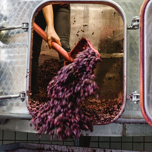 Weinpresse-Weingut-Eppelmamnn-95.jpg