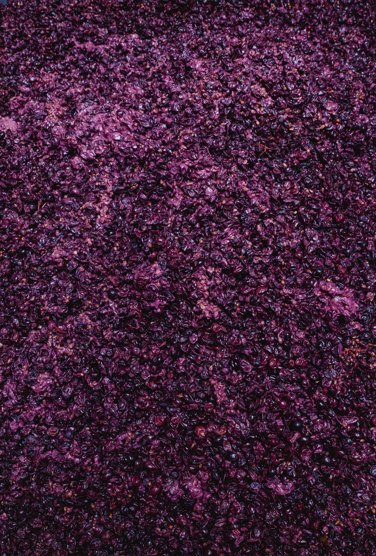 Weinpresse-Weingut-Eppelmamnn-122.jpg