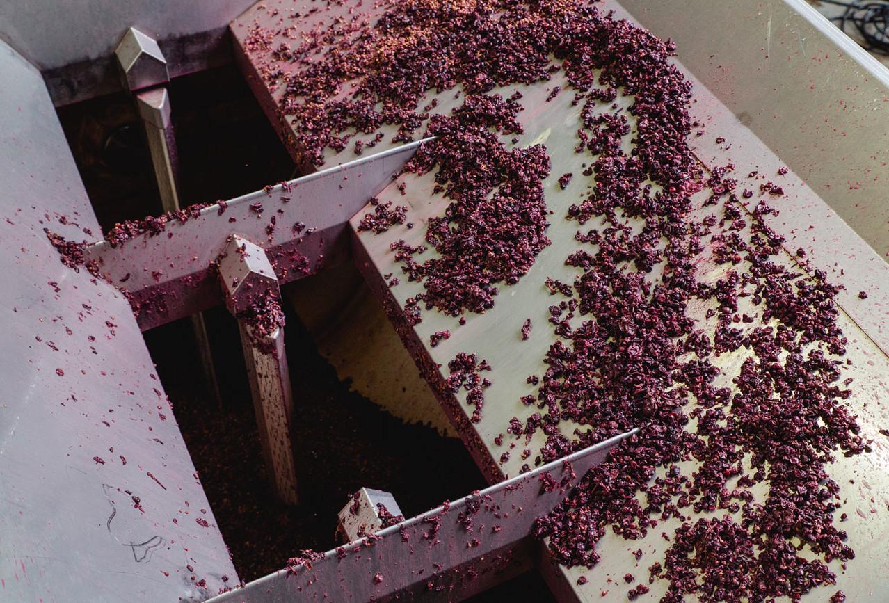 Weinpresse-Weingut-Eppelmamnn-79.jpg