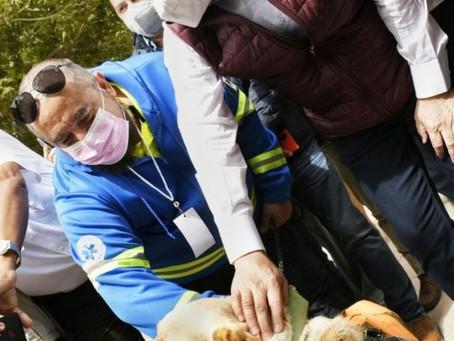 Crear veterinarias públicas para atender animales de la calle, propone Durazo
