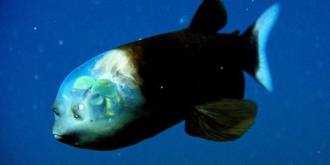 A Deep, Deep Concern About Plastic Pollution