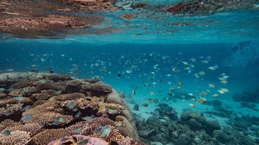 How You Can Help Our Ocean