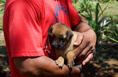 Pacific Hope: Helping Puppies & Pigs in Tonga