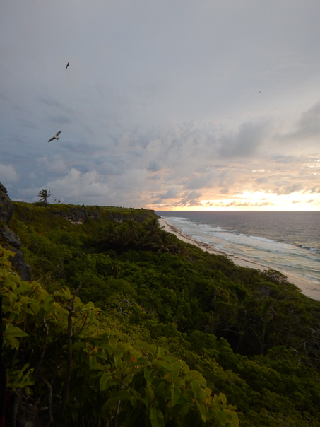 Henderson Island: Castaway Scientists