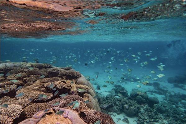 coral reef - angel grimaldi