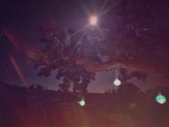 fullmoon&tree.jpg