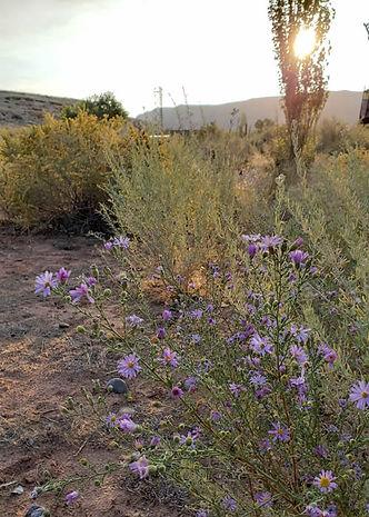 field-flowers.jpg