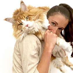 Serena Biella - Allevamento Maine Coon - BB Lions