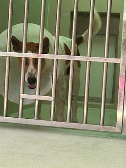meg hogan, business coaching, dog in helmet, animal shelter, soi dog, thailand, animal rescued,