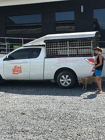 soi dog, thailand, meg hogan, animal hospital, animal shelter, dog