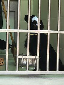 animal rescued, dog in shelter, dog, soi dog, thailand, meg hogan,
