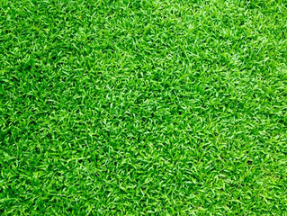 Thought You Knew About All You Needed To Know About Grass?
