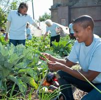 Picking Vegetables