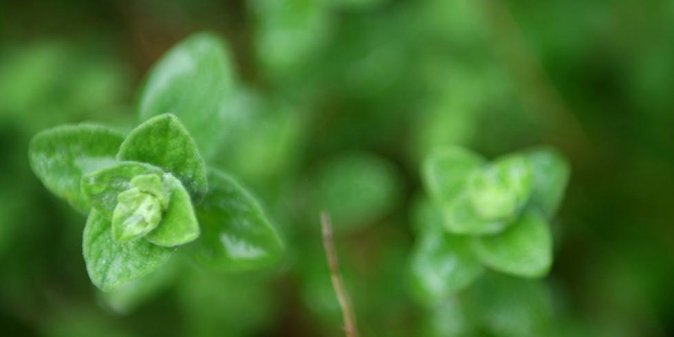 Wild Herb Walk