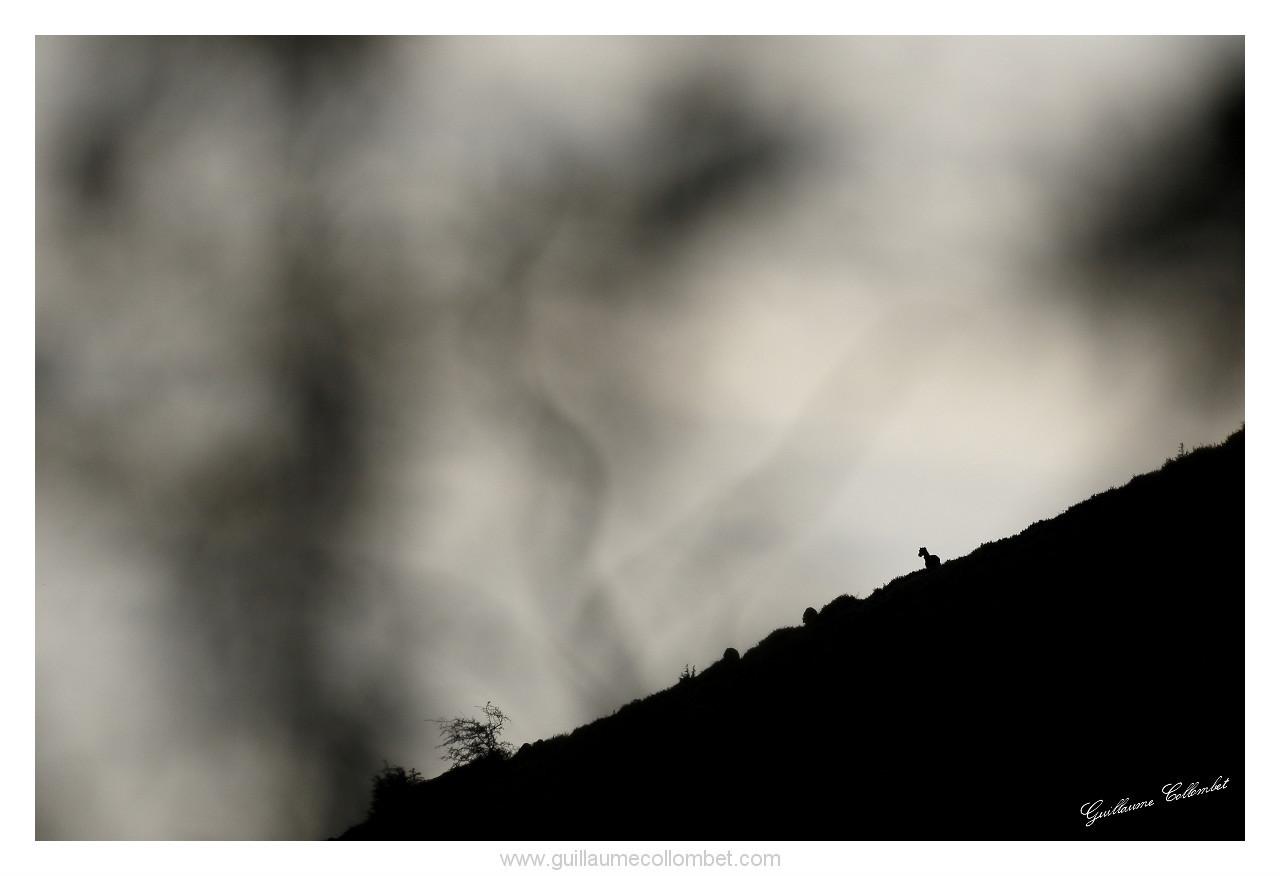 Songe de mouflon