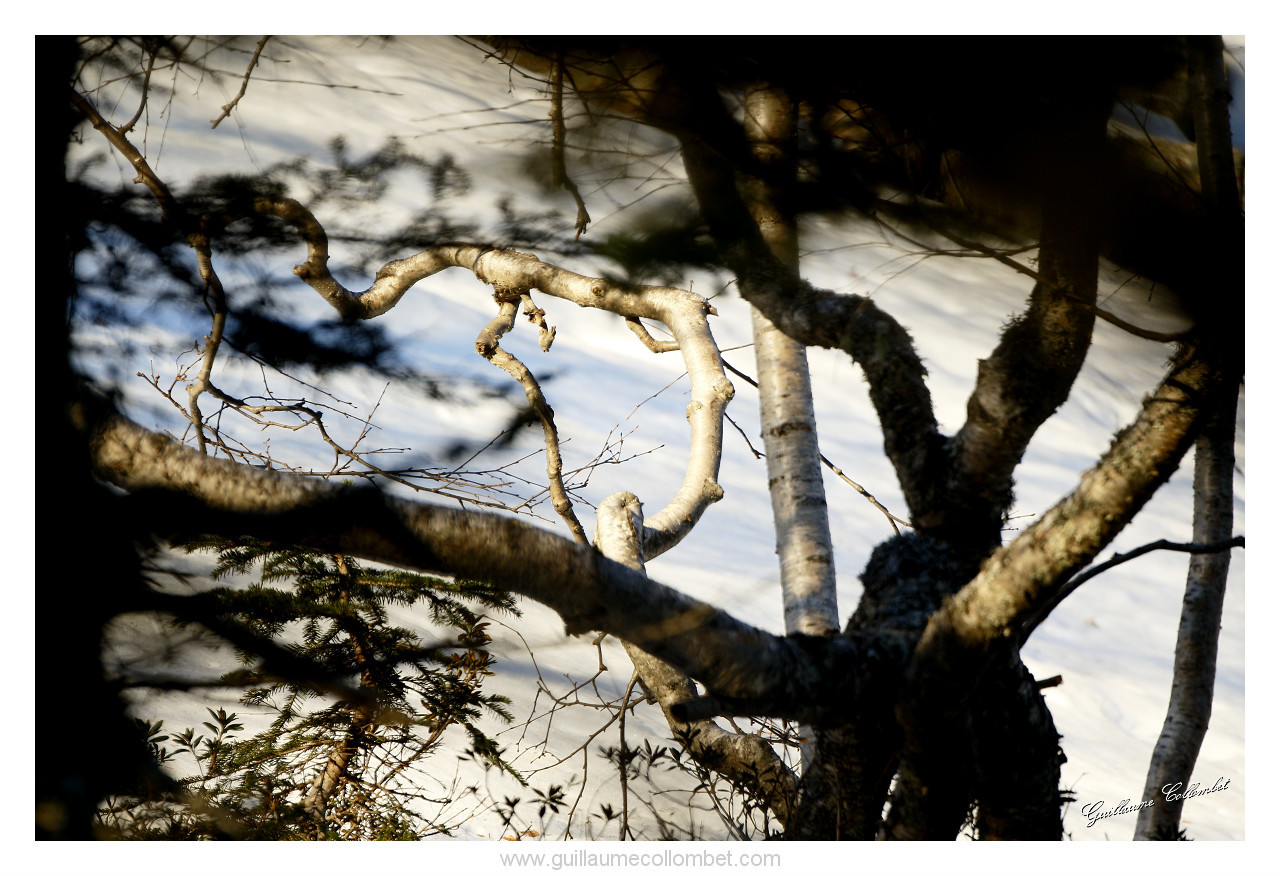 Branches tortueuses