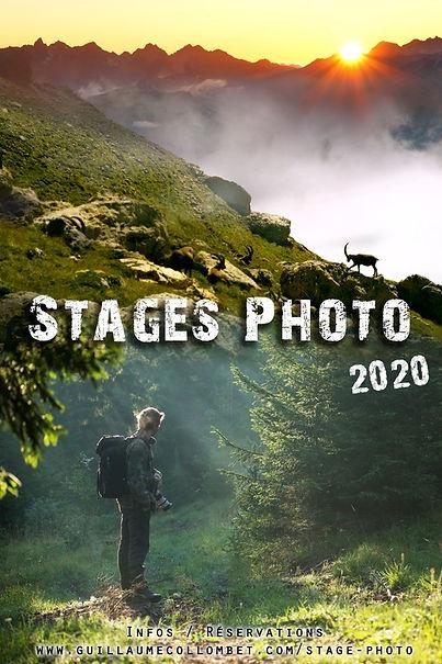 stage photo animalière