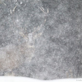 Grand cerf sous la tempête