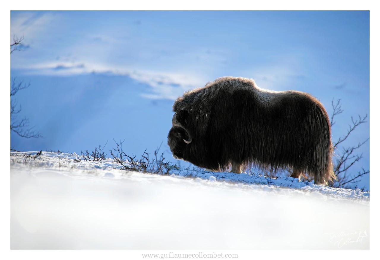 Lueurs arctiques