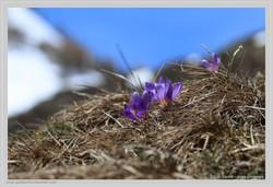 Eveil du printemps