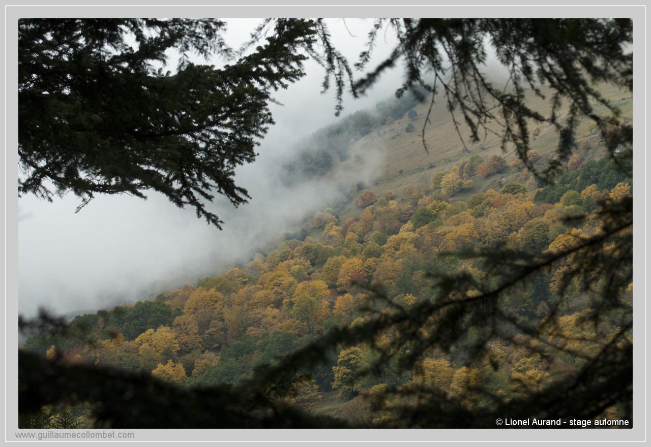 Forêt de brume