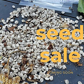 Seed Sale Coming Soon.jpg