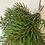 Thumbnail: Trs jedlových větviček