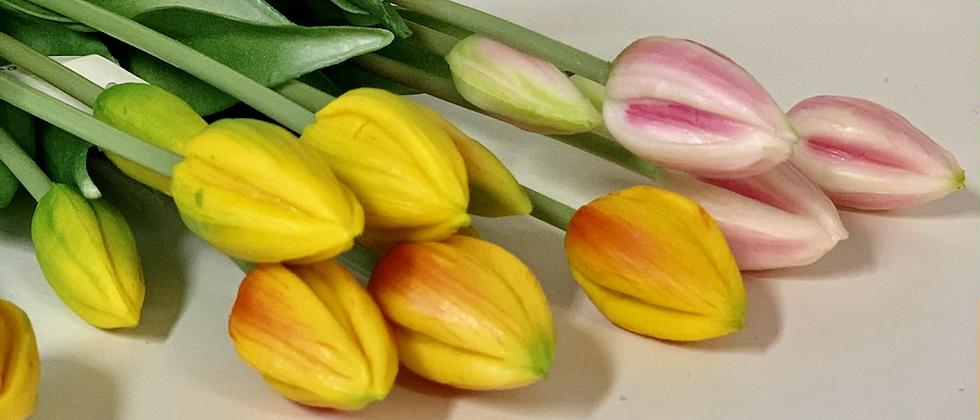 Tulipány poupata