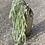 Thumbnail: Převislá zasněžená větev