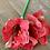 Thumbnail: Amarylis červený