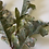 Thumbnail: Zlatý dubový list