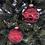 Thumbnail: Skleněné ozdoby červené