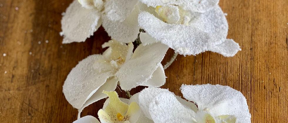 Zasněžená bílá orchidej