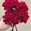 Thumbnail: Hortenzie červená