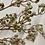 Thumbnail: Větvička bobulí zelenozlatá