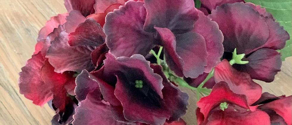Hortenzie rudá