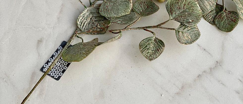 Zlatý eucalyptus
