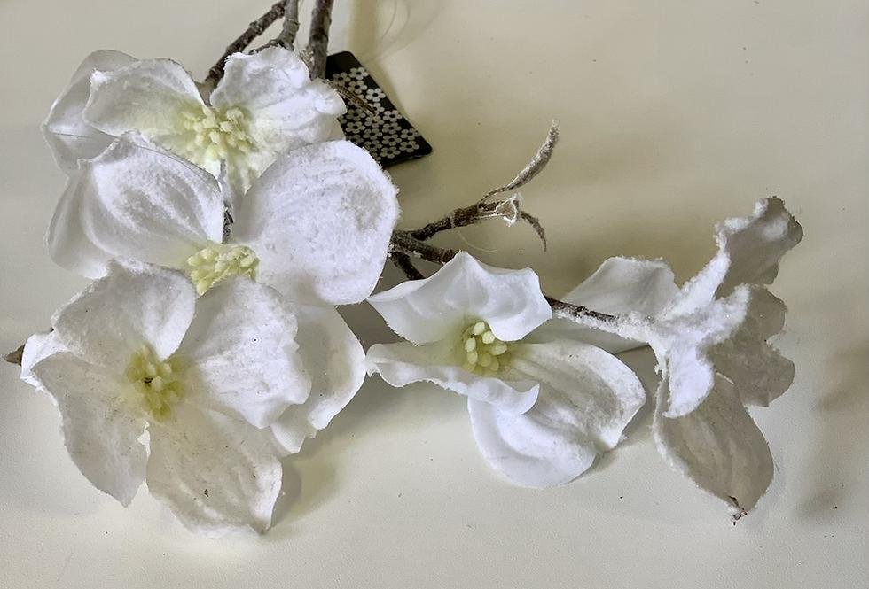 Bílá kamélie