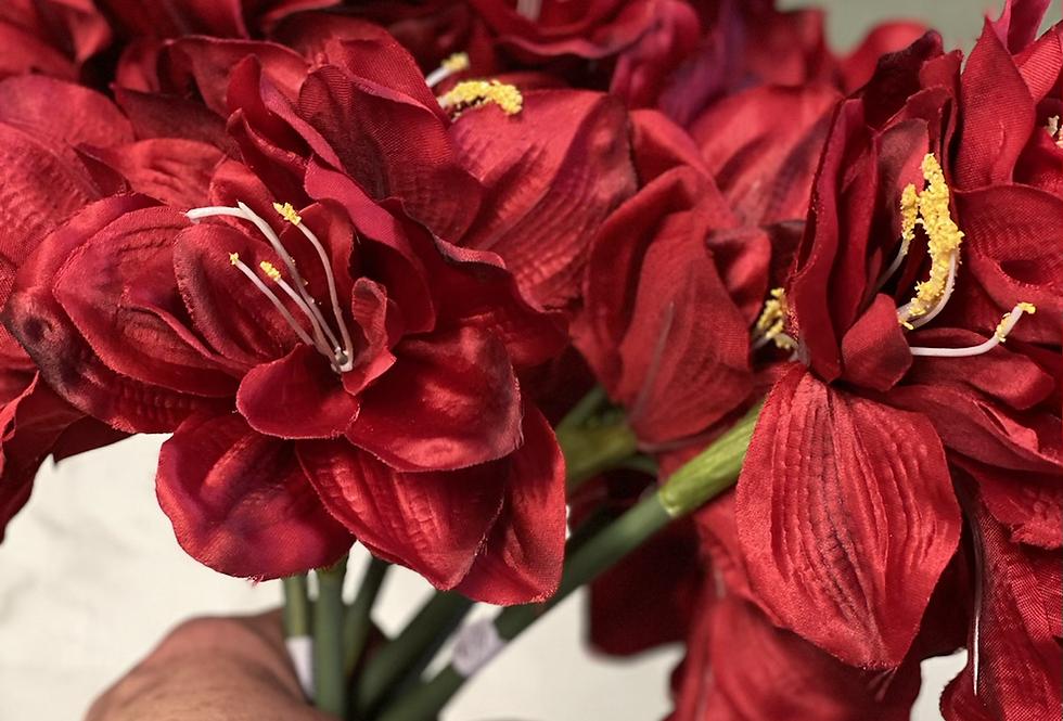 Amarylis červený