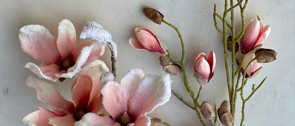 Magnolie velkokvětá