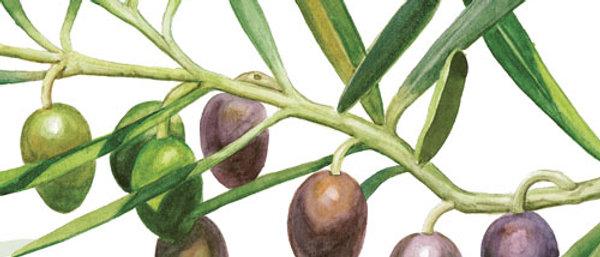 Ubrousky oliva