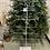 Thumbnail: Strom s hvězdou