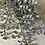 Thumbnail: Stříbrné kapradí